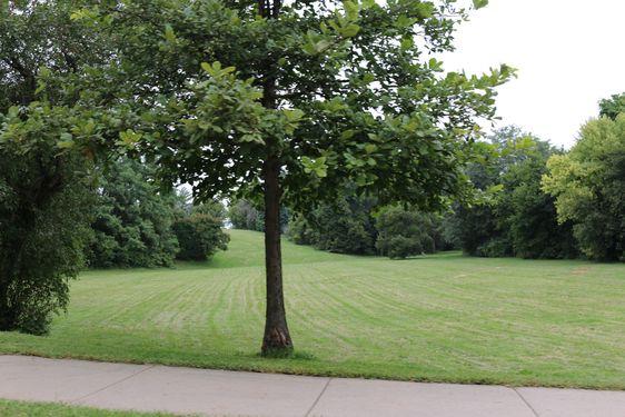 Adams Park Homes for Sale