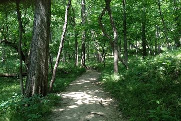 Photo 3 Of Fontenelle Forest