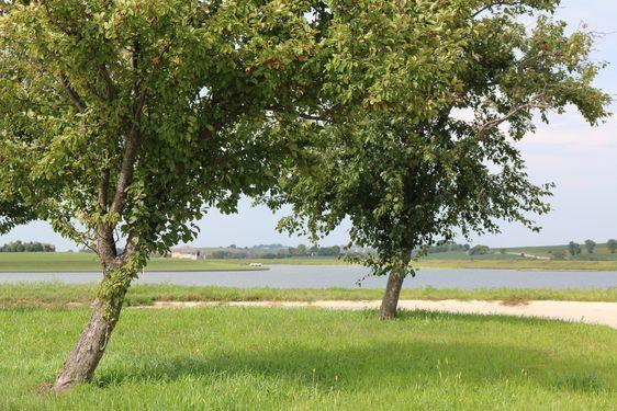 Bennington Lake Real Estate