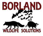 Borland Wildlife Solutions